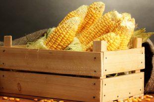 Conheça 5 benefícios do milho para a sua saúde