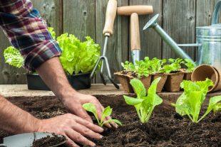 5 dicas para cultivar uma horta em casa