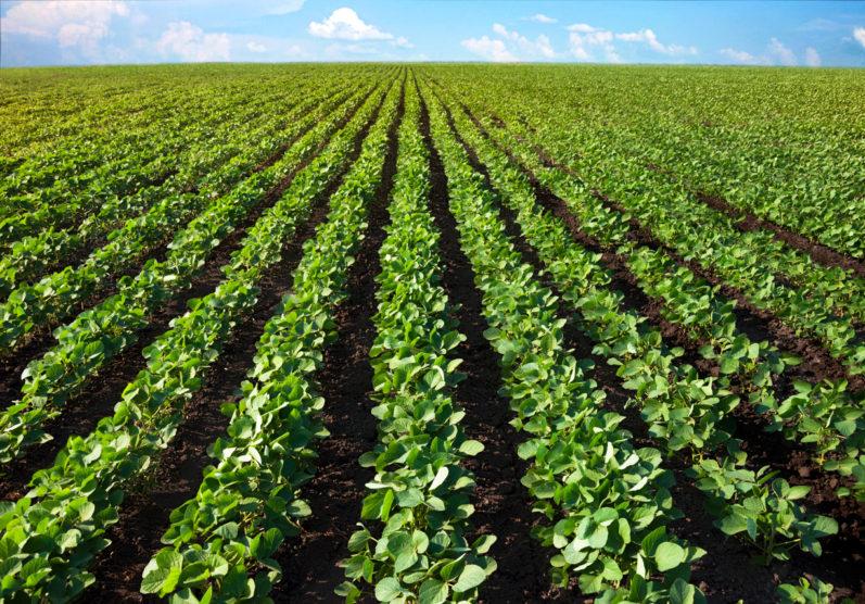 5 práticas para melhorar a produtividade na agricultura