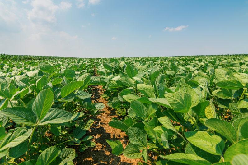 Produtores associados da Coperaguas vencem importantes desafios no agronegócio brasileiro