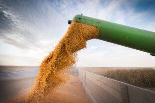 Aumente a produtividade do milho com essas 4 dicas
