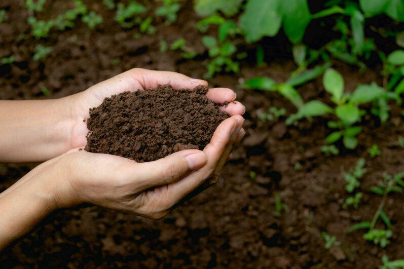 Degradação do solo: principais causas e como prevenir