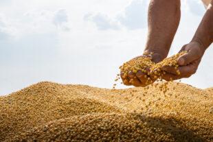 Boas práticas para aumentar a produtividade da lavoura de soja