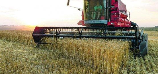 Brasileiro corta o pão e afeta demanda por trigo