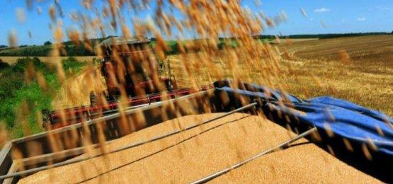 Santa Catarina vai fechar ano importando 3,5 milhões de toneladas de milho