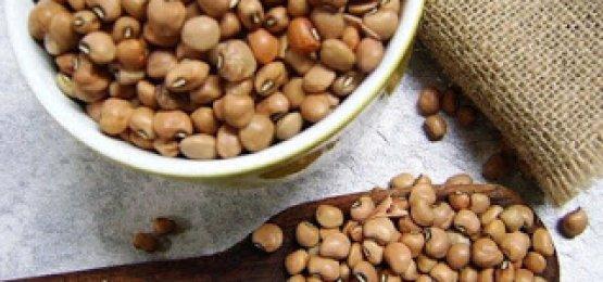PR: Primeira safra do feijão promete bom retorno ao produtor
