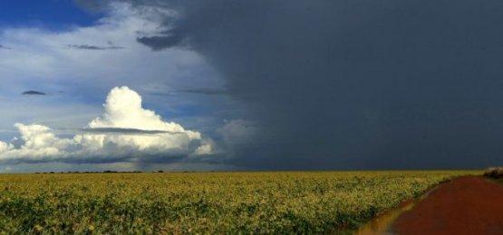 Chuva não dá trégua e maior parte dos produtores de SC ainda não iniciou o plantio