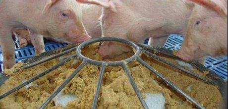 Investir na nutrição de qualidade reduz custo da produção animal, diz especialista