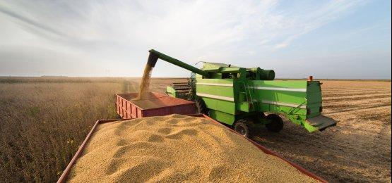 Será? Consultoria prevê safra de 114 milhões de toneladas de soja no Brasil