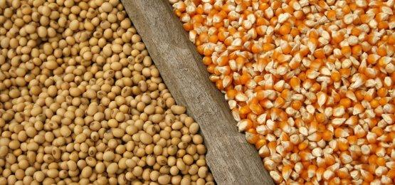 Cotações do milho e da soja registram alta no mercado