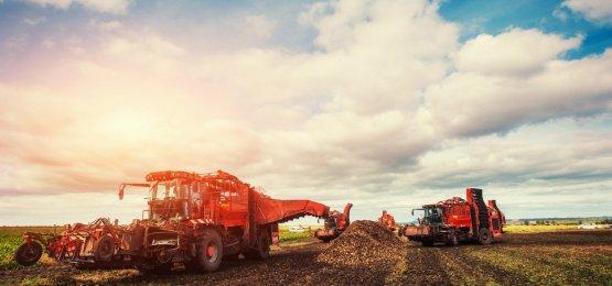 Valor da Produção Agropecuária é de R$ 539 bilhões