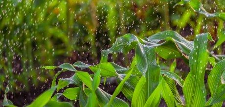 Chuvas elevam em 2,2% previsão da safra para este ano