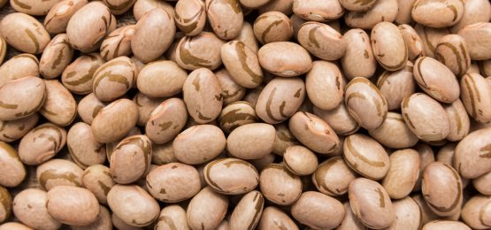 Seca no Sul poderá prejudicar o feijão da segunda safra