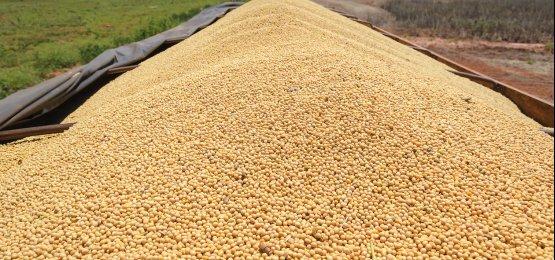 Agronegócio responde por 65% das exportações catarinenses em 2017