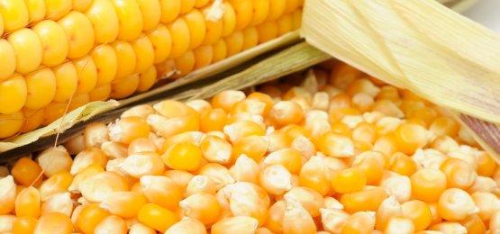 Safra 2017/18 é marcada por queda na área plantada e menor rentabilidade do milho