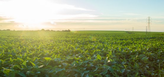 Agronegócio foi responsável por 36,3% do total das exportações brasileiras em janeiro