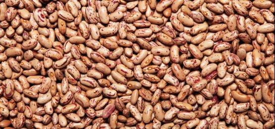 IBGE: expectativa de safra de feijão de 3,3 mi de t é boa e atende consumo