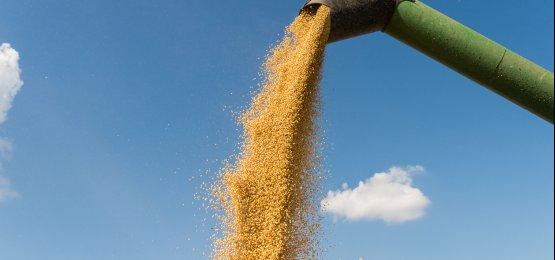 País deve ter segunda maior colheita de grãos neste ano