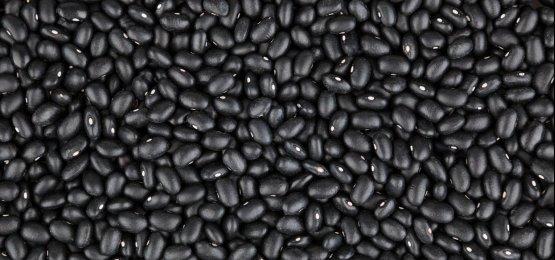 Feijão: segunda safra com produção diversificada