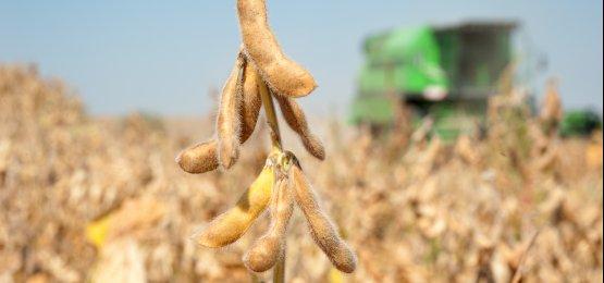 USDA eleva oferta e estoques de soja nos EUA e no mundo