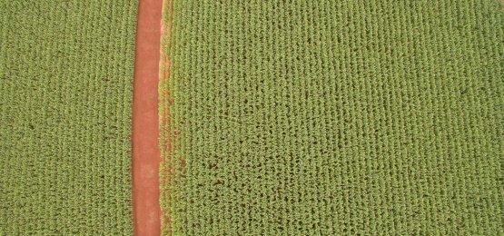 Valor da Produção Agropecuária está estimado em R$ 562,4 bi