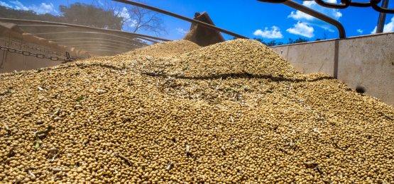 Preços da soja se sustentaram em 2018