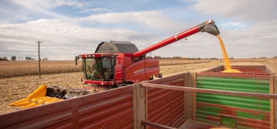 2ª safra de milho concentra a maior parte da produção