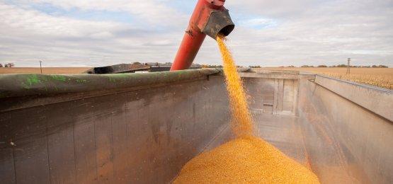 Milho tem valorizações limitadas no final de junho