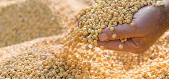 Soja: veja os riscos e oportunidades para comercialização da nova safra