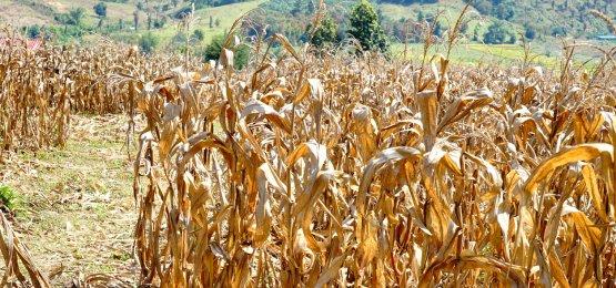 Crise hídrica está afetando a produção de alimentos no país