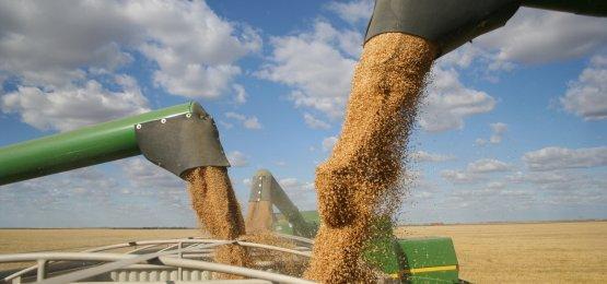 Exportações do agronegócio cresceram 20,9% no primeiro semestre de 2021, diz Ipea