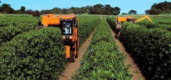 Cooperativas brasileiras já respondem por 54% da produção agropecuária