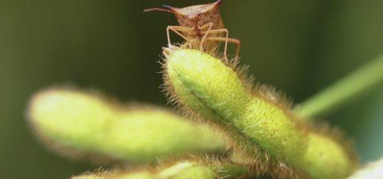 Agricultura caminha para nova era dos bioinsumos
