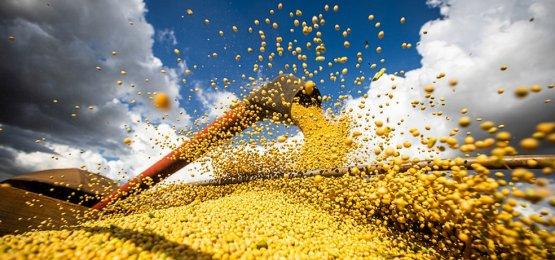 Preços da soja, milho e algodão sobem acima de 70% no Brasil no primeiro semestre deste ano