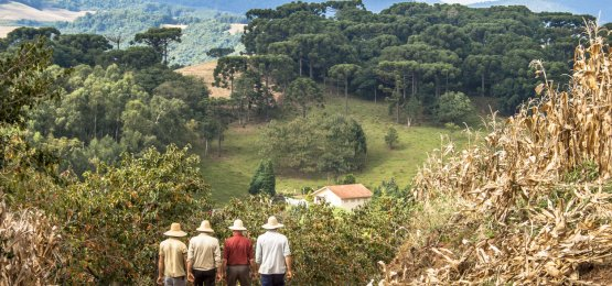 Senado aprova projeto com medidas para auxiliar agricultores familiares em razão da pandemia