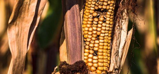 Ipea reduz projeção de crescimento para o PIB do agronegócio