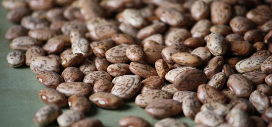 Are dry edible beans in your future?